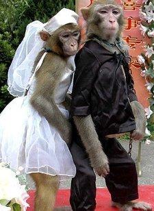 Amor Primate