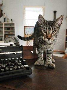 Gatos Escritores