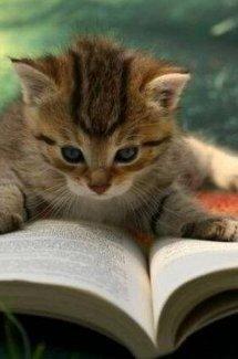 Gatos y libros
