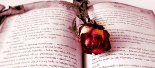 Libro romántico abierto con una rosa roja en mitad de sus páginas
