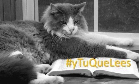 Gato peludo tumbado sobre un libro como si fuera a leer