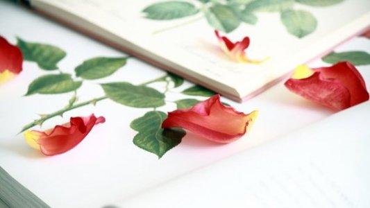 Libro abierto por la mitad con pétalos de rosa sobre sus páginas