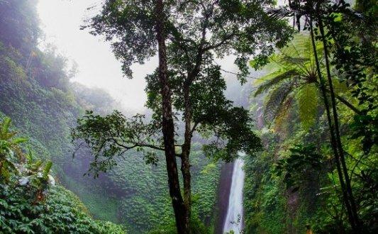 Imagen de un árbol en mitad de la selva con una cascada al fondo.