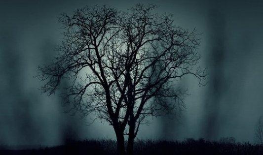 Imagen nocturna de un árbol en medio de un páramo desolado