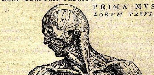 Detalle de una de las ilustraciones clásicas de anatomía de Vesalio.