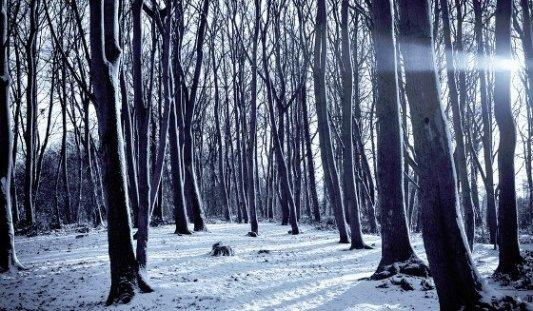 Panorámica de un bosque nevado durante el invierno en un día soleado.