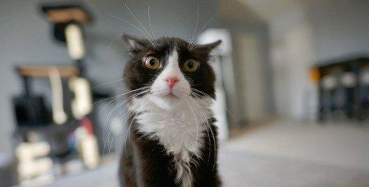 Primer plano de un gato ejerciendo sus místicos poderes de control mental.