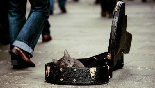 Gato dentro de una funda de guitarra en la calle.