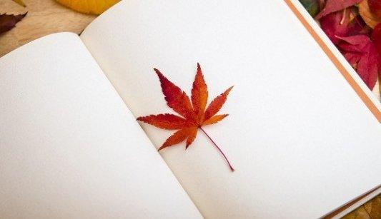 Libro en blanco con una hoja de árbol caduca.