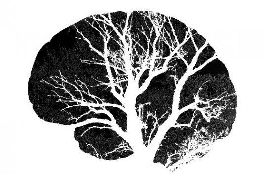 Perfil de un cerebro humano con un árbol en su interior.