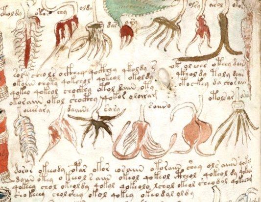 Página del Manuscrito Voynich.