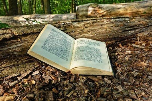 Libro abierto en el bosque.