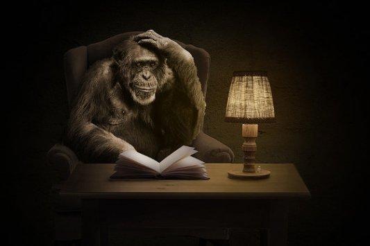 Mono leyendo.