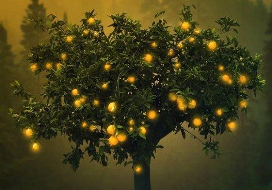 Naranjas en un árbol de fantasía.